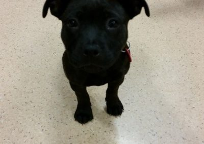 Puppy Classes & Training at Hilton Vet