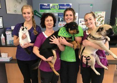 Hilton vet hospital nurses
