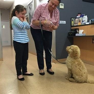 Puppy Classes & Training