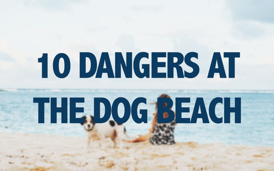 10 Dangers At The Dog Beach
