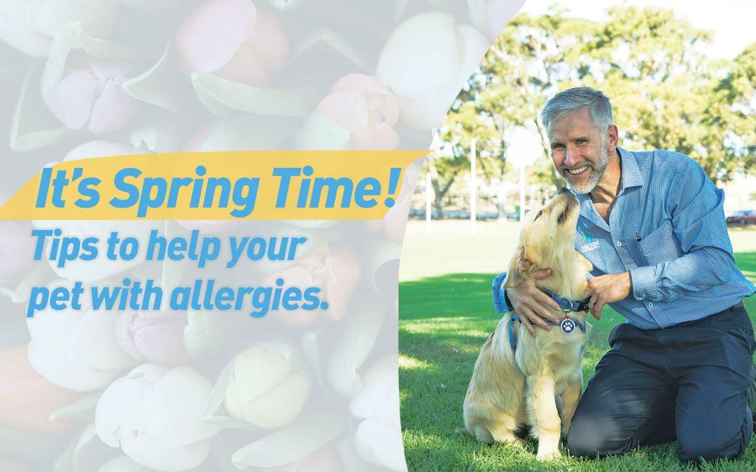 Allergies in Pets