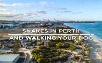 Snakes In Perth Warning.