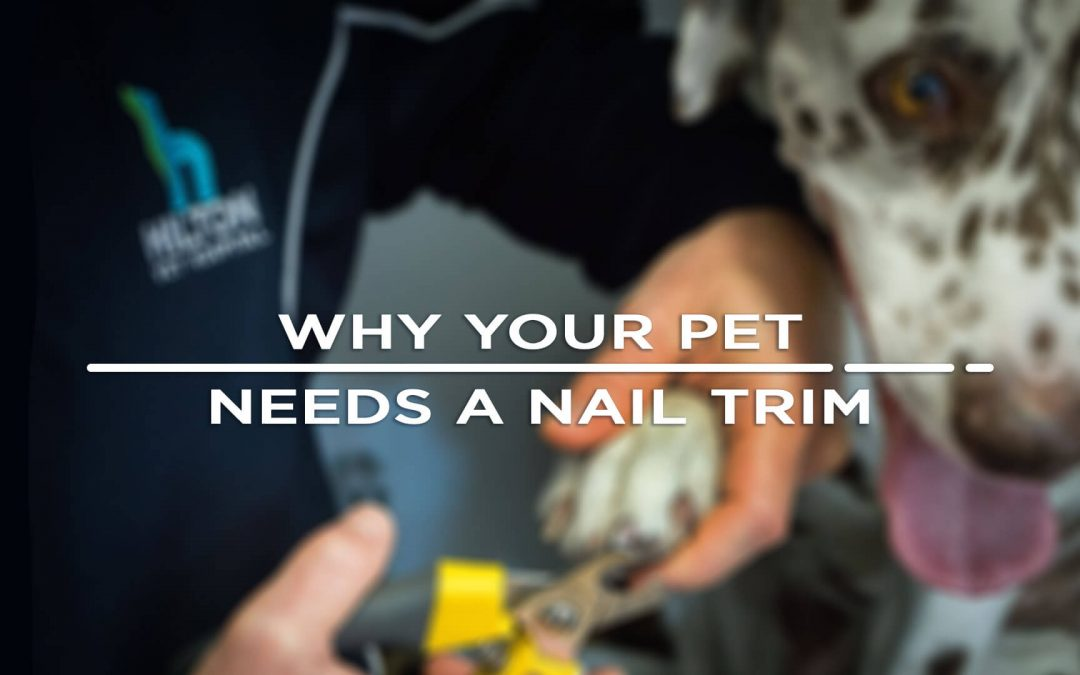 Why your pet needs a nail trim