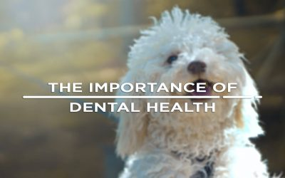Your Pet's Dental Health Explained.